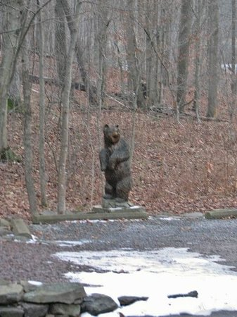 Bear Mountain Lodge: Bear in the woods