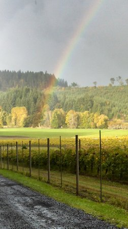 Airlie Winery: Airlie at the rainbows end