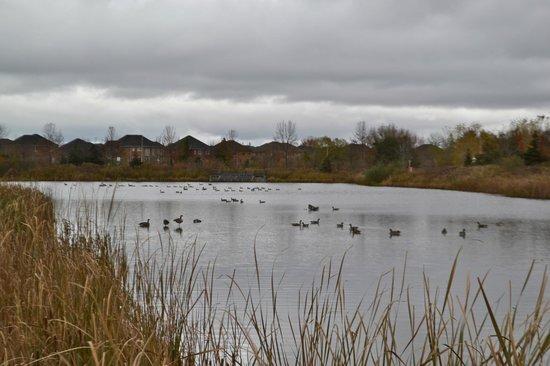 Mackenzie Glen District Park : Many birds on the water