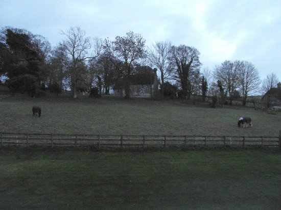 Rollestone Manor: Horses outside our bedroom window