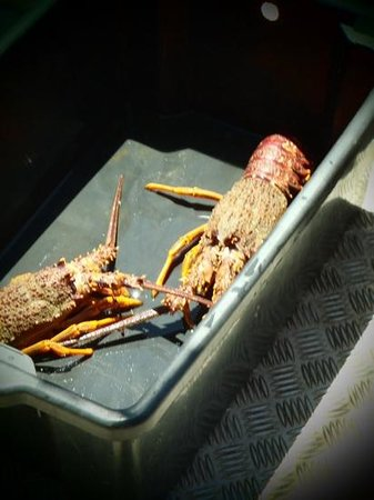 Bazil's Hostel & Surf School : the caught crayfish :) scary things!