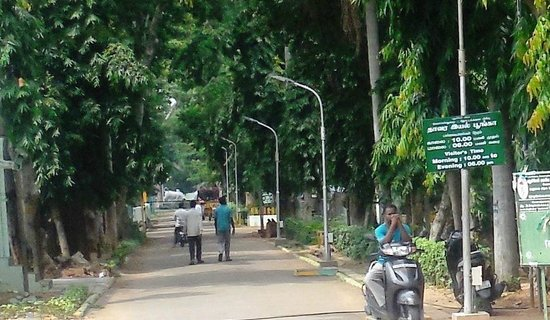 Pondicherry Botanical Gardens: Way to Botanical garden ,shaded by big trees forming arcade appearance.
