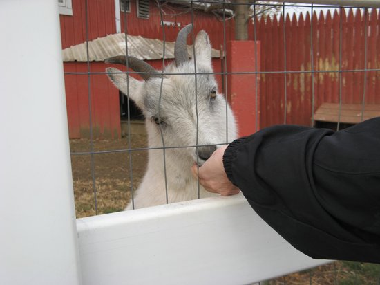 Hershey Farm Inn: Feed the live goats...they are adorable.
