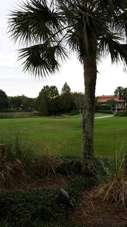 Villas of Grand Cypress: View from patio