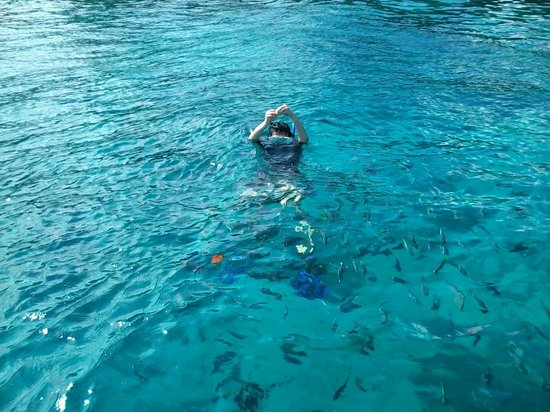 Dive Down : Surrounded by colorful fish at Racha Yai Island Phuket