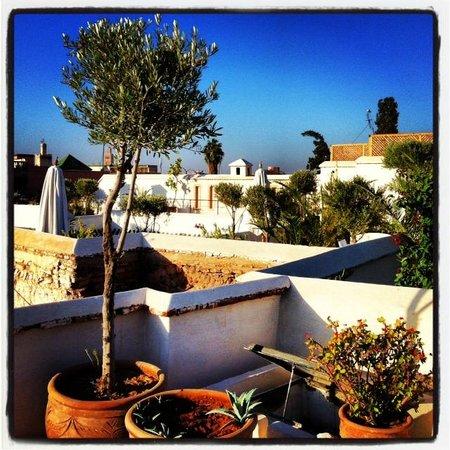 Riad Camilia: Rooftop sunshine.