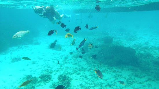 Marine Adventures: Swimming among the fish