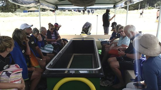 Marine Adventures: Glass bottomed boat
