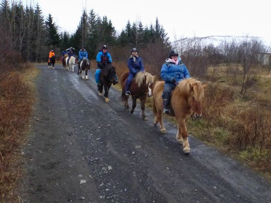 Laxnes Horse Farm : The horses follow each other
