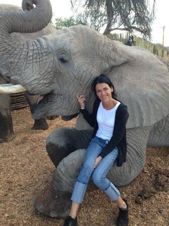 Buffelsdrift Game Lodge: Elephant experience