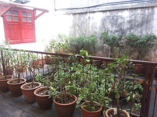 Da Som Inn : small garden..view from 1st floor