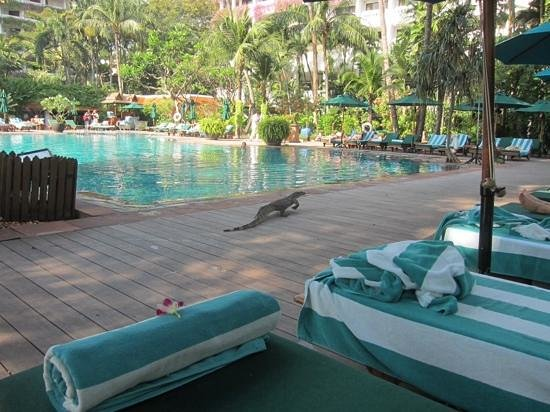 Anantara Riverside Bangkok Resort : a hotel pet?