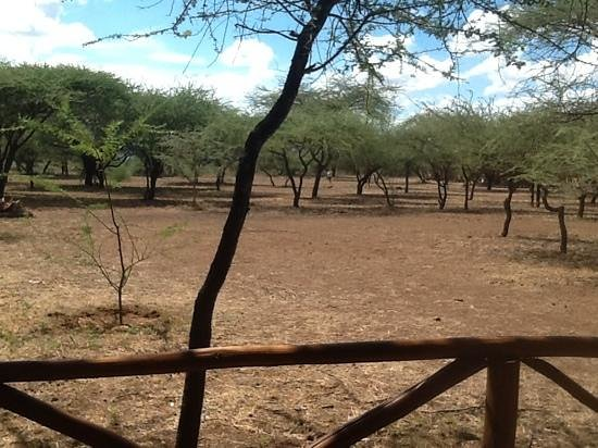 Severin Safari Camp: View from Tent 11
