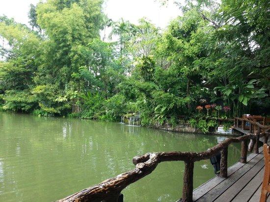 Khaomao-Khaofang Restaurant : Beautiful rain forest environment