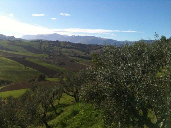 Agriturismo Colle Regnano: Questo e lo spettacolo al mattino in un semplice mattino di novembre... Immaginate d estate