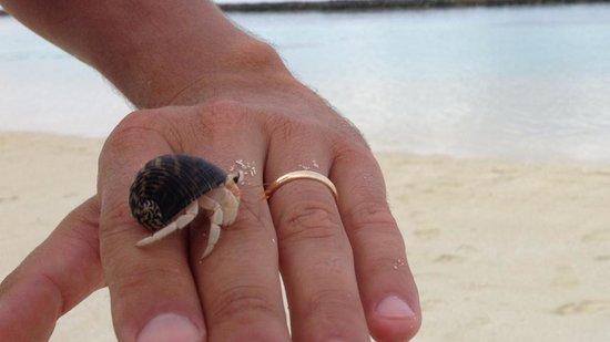 Velidhu Island Resort : Paguri