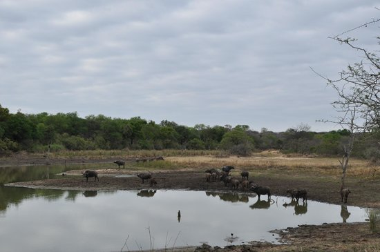 Kapama River Lodge: A reserva é repleta de animais das mais variadas espécies.