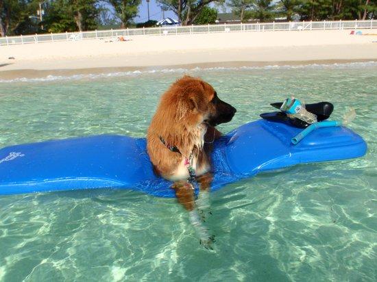 Seven Mile Beach: My dog enjoys the beach as much as I do!
