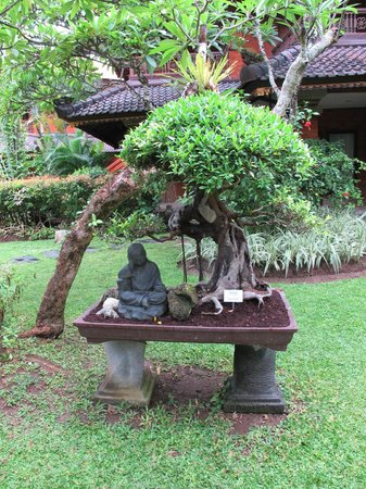 Keraton Jimbaran Beach Resort: Bonsai koleksiyonu