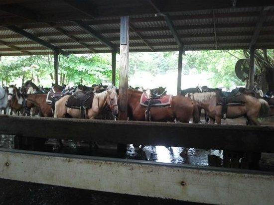 Wyndham Grand Rio Mar Beach Resort & Spa: Carabali horse farm, We went horseback riding on the beach