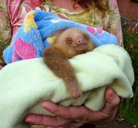 La Fortuna de San Carlos, Costa Rica: sengångare