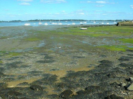 Seanergie : Croisière Golfe du Morbihan : Golfe du Morbihan: Francia: basa marea