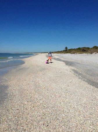 Captain Randys Fishy Business: Shelling on Cayo Coasta