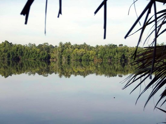 Mangrove Villa : Вид на реку