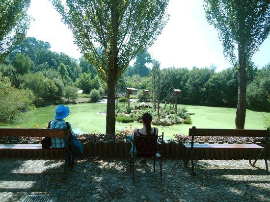 Zoo Santo Inácio : Vista Bar do Lago | View from the Lake Snack Bar