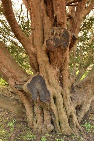 Michelham Priory: Gnarly Tree Full Of Character