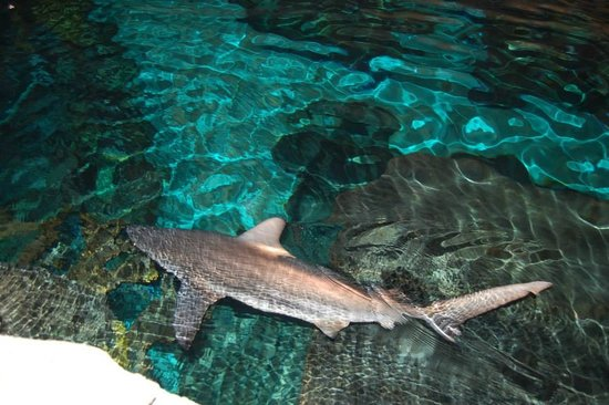 Ripley's Aquarium of the Smokies: Some of the sights