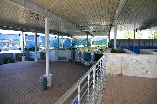 Mote Marine Laboratory and Aquarium: Shark Aquarium - Mote Marine