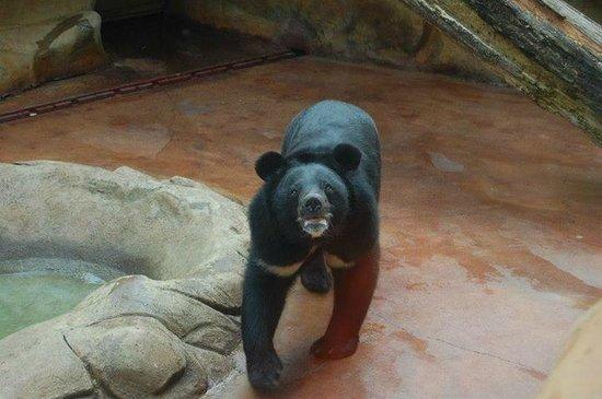 Three Bears General Store : Bear Exhibit