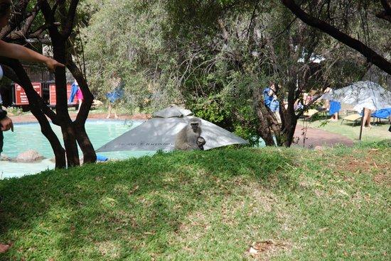 Bakubung Bush Lodge: Les petits signes et vue sur la piscine