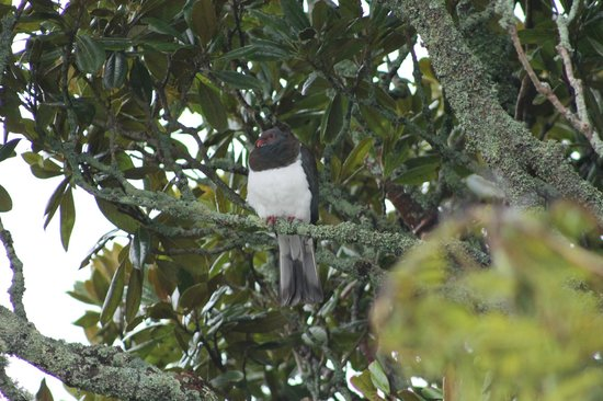 Buller Bridge Motel : Wildlife in the trees our Native Birds