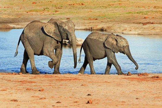 Wilderness Safaris Little Makalolo Camp : View from Hide @ Little Mak