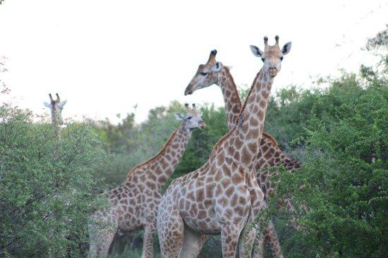 The Vuyani Safari Lodge: So pretty