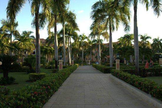 Grand Bahia Principe Bavaro : Hotel garden