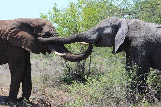 The Vuyani Safari Lodge: Ahh