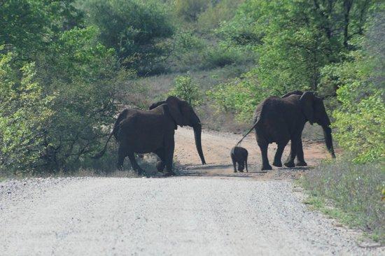 The Vuyani Safari Lodge: Wait for me mum