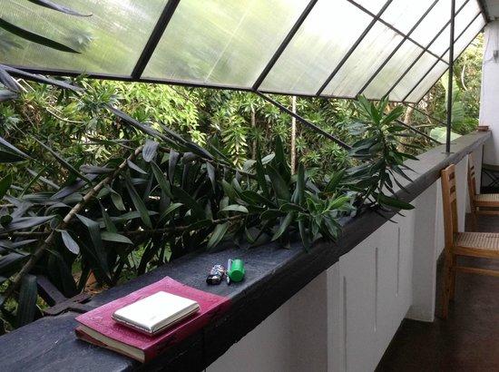 Ranjit's Ambalama: The balcony, with verdant foliage.