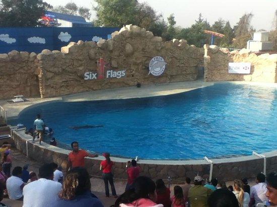 Six Flags Mexico : Delfines