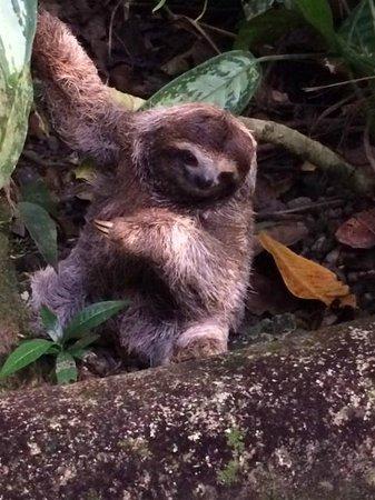 Korrigan Lodge: Baby Sloth