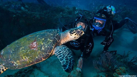 Scuba Diving In West Palm Beach