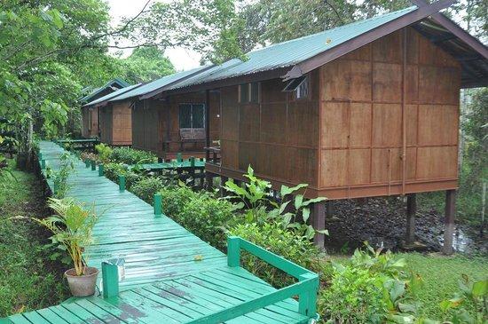Nature Lodge Kinabatangan: Деревянные мостки соединяют все лоджи.