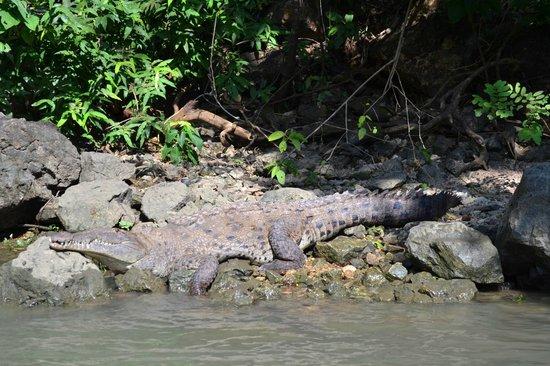 Cañón del Sumidero : coccodrillo!!