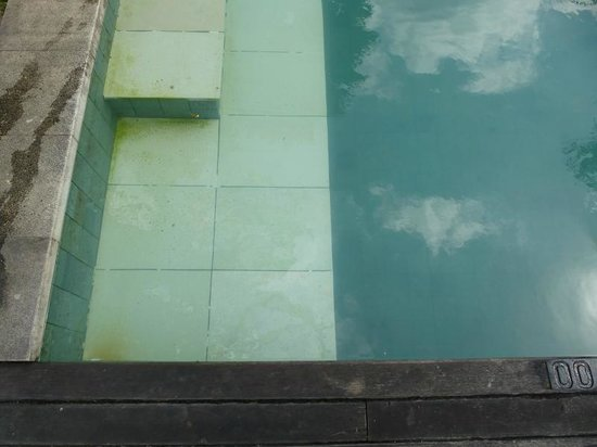 ‪‪Y Resort Ubud‬: Algen im Pool‬