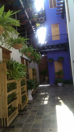 Casa de Leda - a Kali Hotel: lobby has many plants and plantings