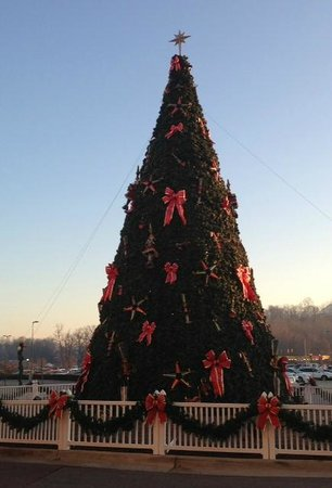 French Lick Springs Hotel : Outside tree