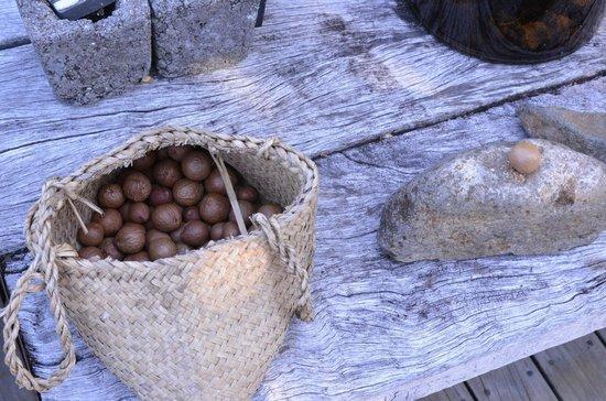 Wairua Lodge - The Hidden River Valley: Fresh Macadamias